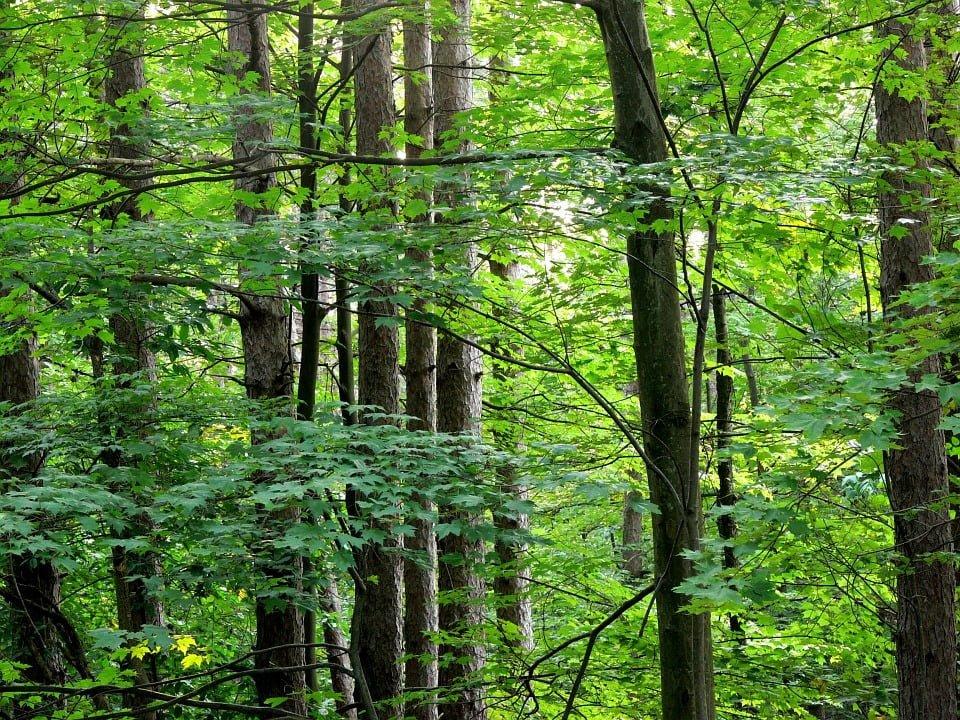 Wycinanie drzew, a sprzedaż nieruchomości.