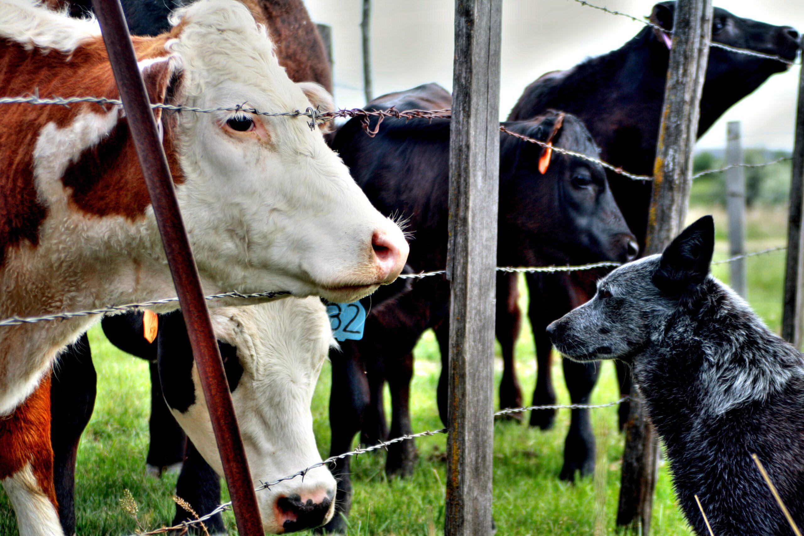 Ubezpieczenie rolnika, a szkoda wyrządzona przez psa