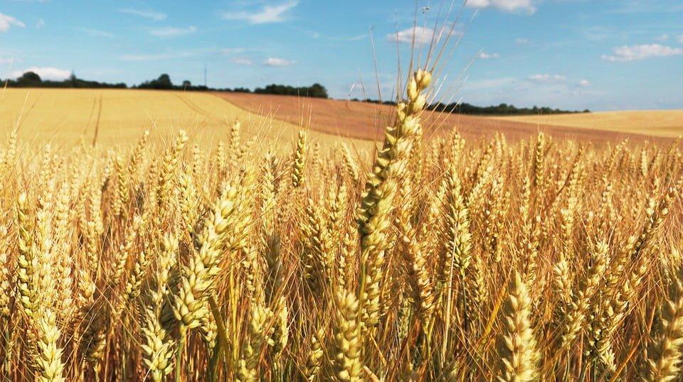 Nowa umowa w rolnictwie