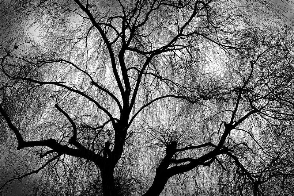Drzewa i krzewy w kontekście ochrony zabytków. Jak postępować?