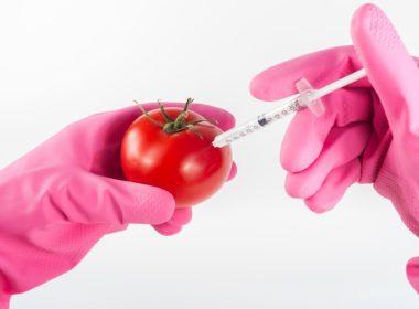 GMO pod większą kontrolą
