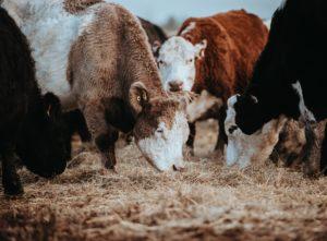 Pasza dla zwierząt - akt prawny Komisji Europejskiej
