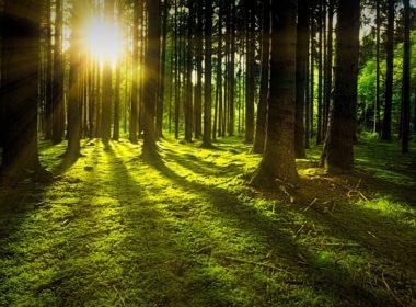 Wyrok TSUE ws. wycinki drzew w Puszczy Białowieskiej