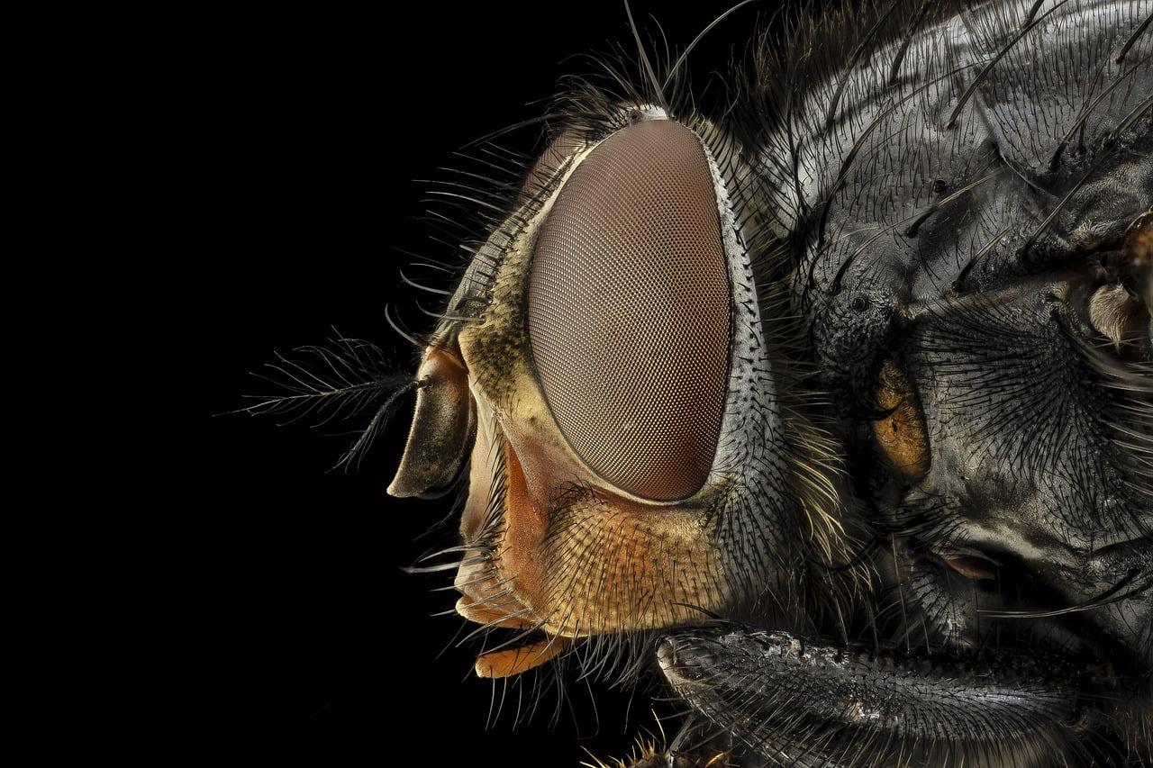 Entomolog sądowy (na zdjęciu: muchówka)
