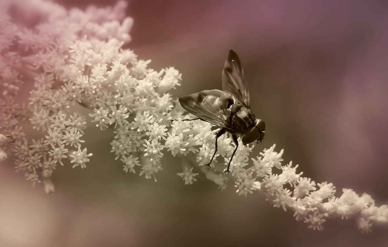 Entomologia sądowa - Czy owady mogą pomóc w identyfikacji zwłok?