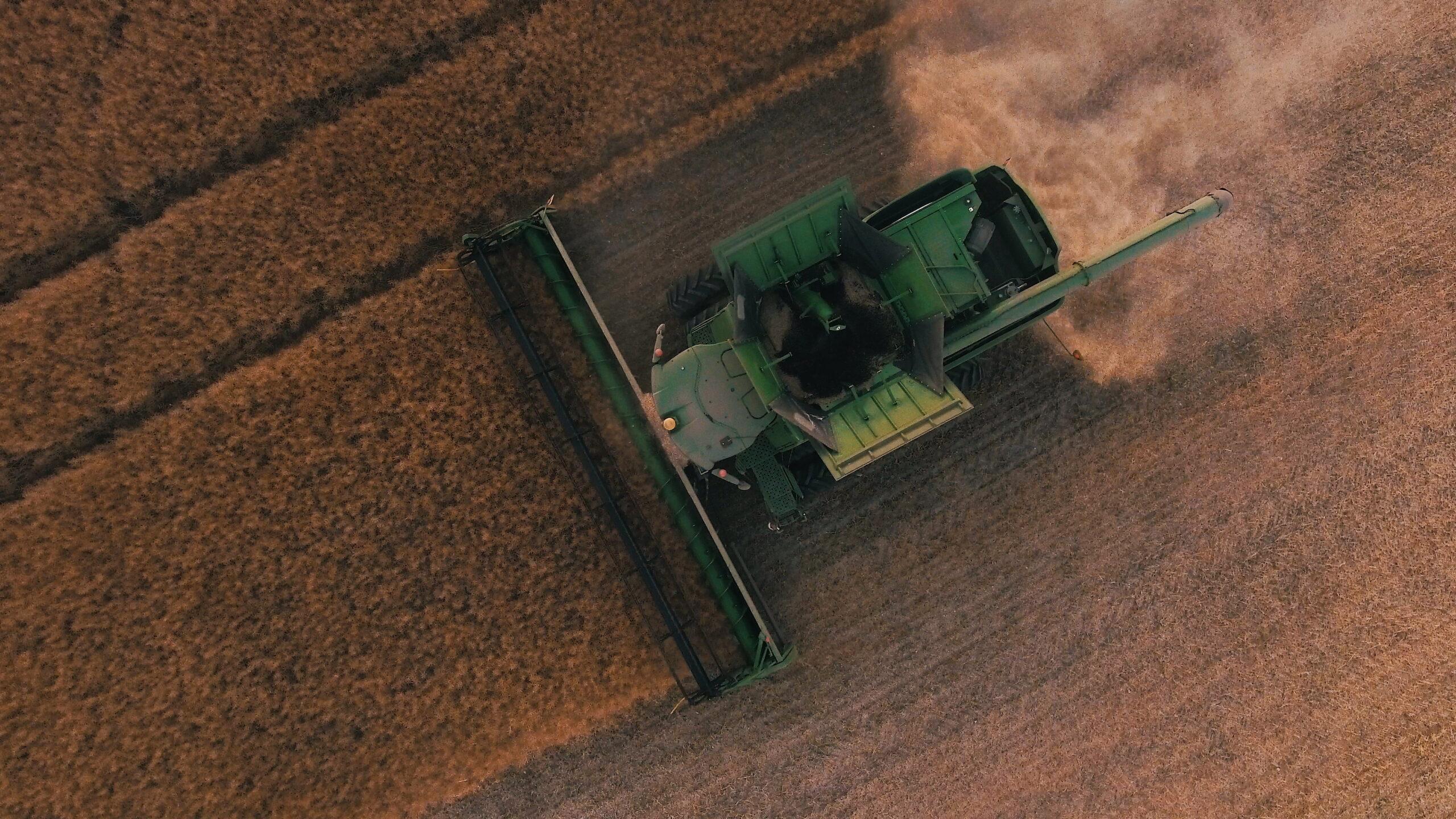 Dywersyfikacja upraw - nowy termin