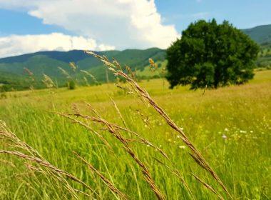 Jak sprzedać nieruchomość rolną?