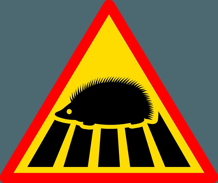 Zderzenie ze zwierzęciem - odpowiedzialność za szkody