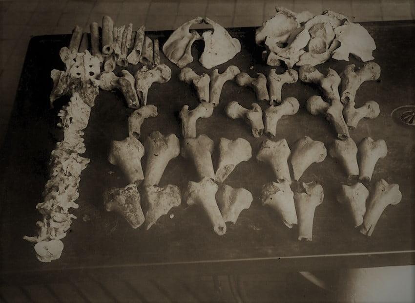 Kości ofiar Karla Denkego