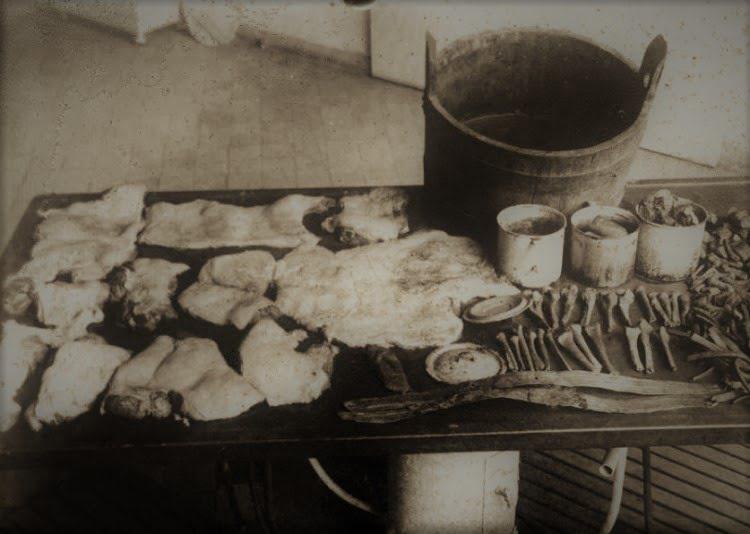 Ludzka, wygarbowana skóra i fragmenty kości ofiar Karla Denkego