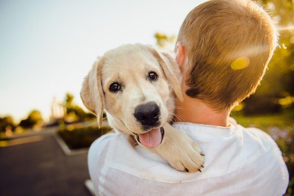 NSA: Do parku wejdziemy z psem