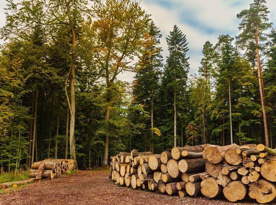 Uznaniowy charakter udzielenia pozwolenia na wycięcie drzew lub odmowy wydania takiego pozwolenia