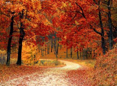 Zakaz wejścia do lasów państwowych