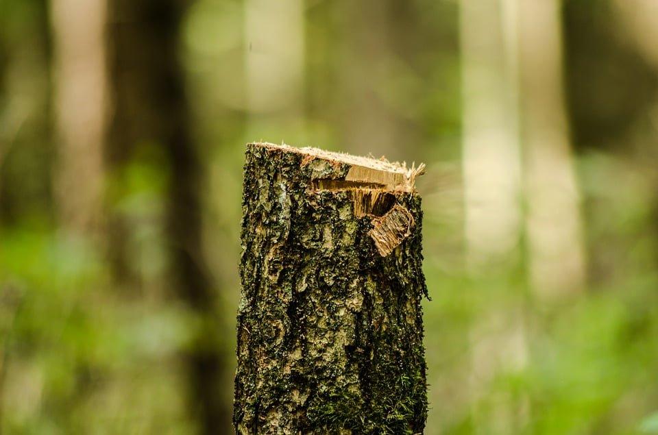 Obiektywny charakter odpowiedzialności administracyjnej za usunięcie drzew