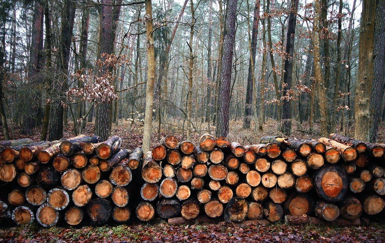 Wycinka drzew na własnej posesji? Zezwolenie albo grzywna!