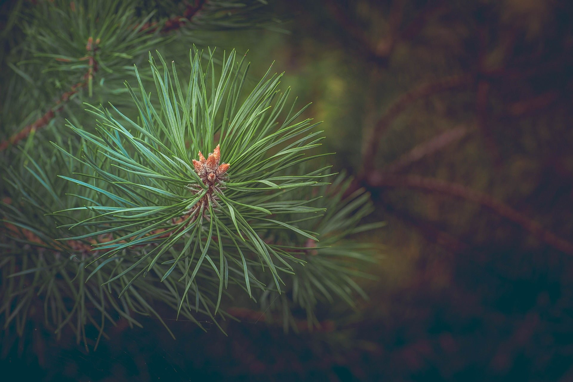Nielegalna wycinka drzewa - co na to prawo?
