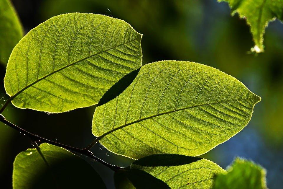 Krąg stron postępowania w przedmiocie przeglądu ekologicznego
