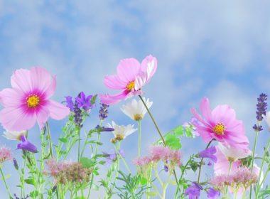 Odmiana roślin jako utwór w rozumieniu prawa autorskiego