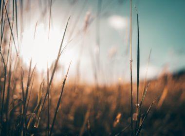 Ograniczenie w nabywaniu nieruchomości rolnych
