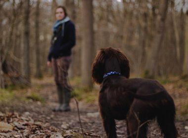 Co grozi za porzucenie psa? Konsekwencje prawne
