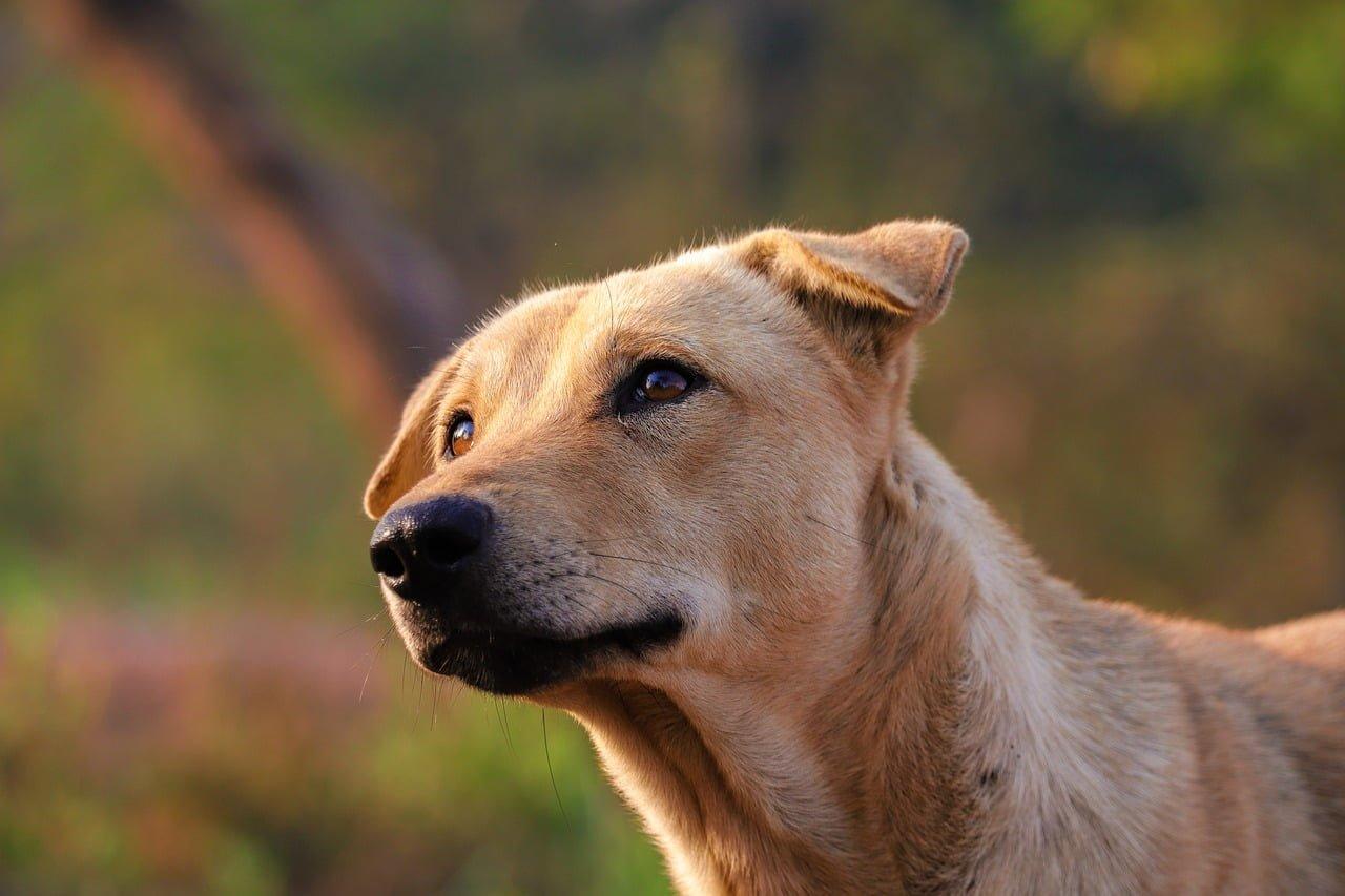 porzucony pies – co za to grozi
