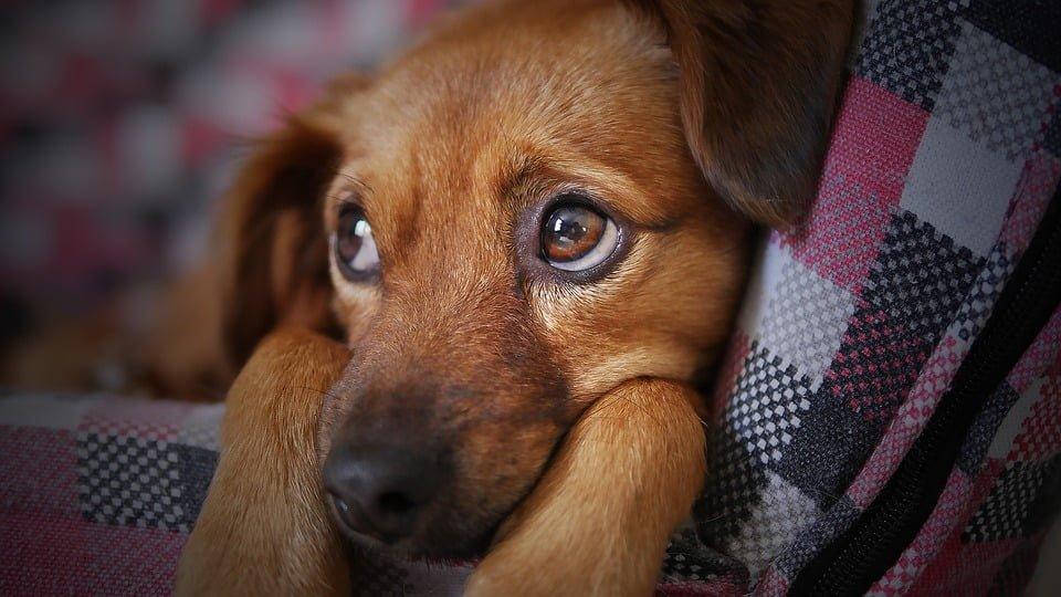 Co może zająć komornik? Czy komornik może zająć psa? Co podlega egzekucji komorniczej?