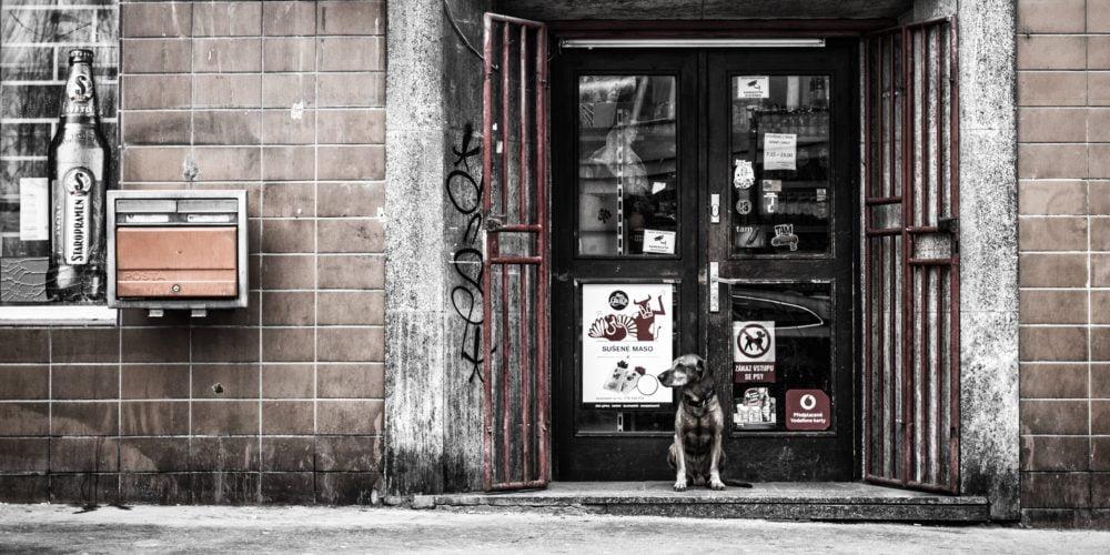 Czy można wejść z psem do sklepu albo restauracji?