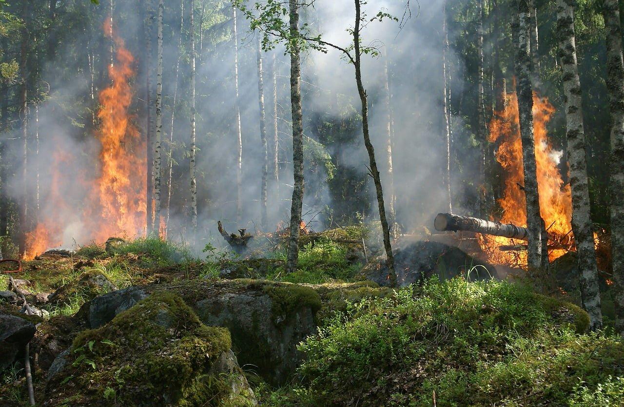 """Ekoterroryzm """"w obronie starych ścieżek""""? - Zniszczenie rzeczy i podpalenie lasu"""