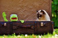 Kot w walizce