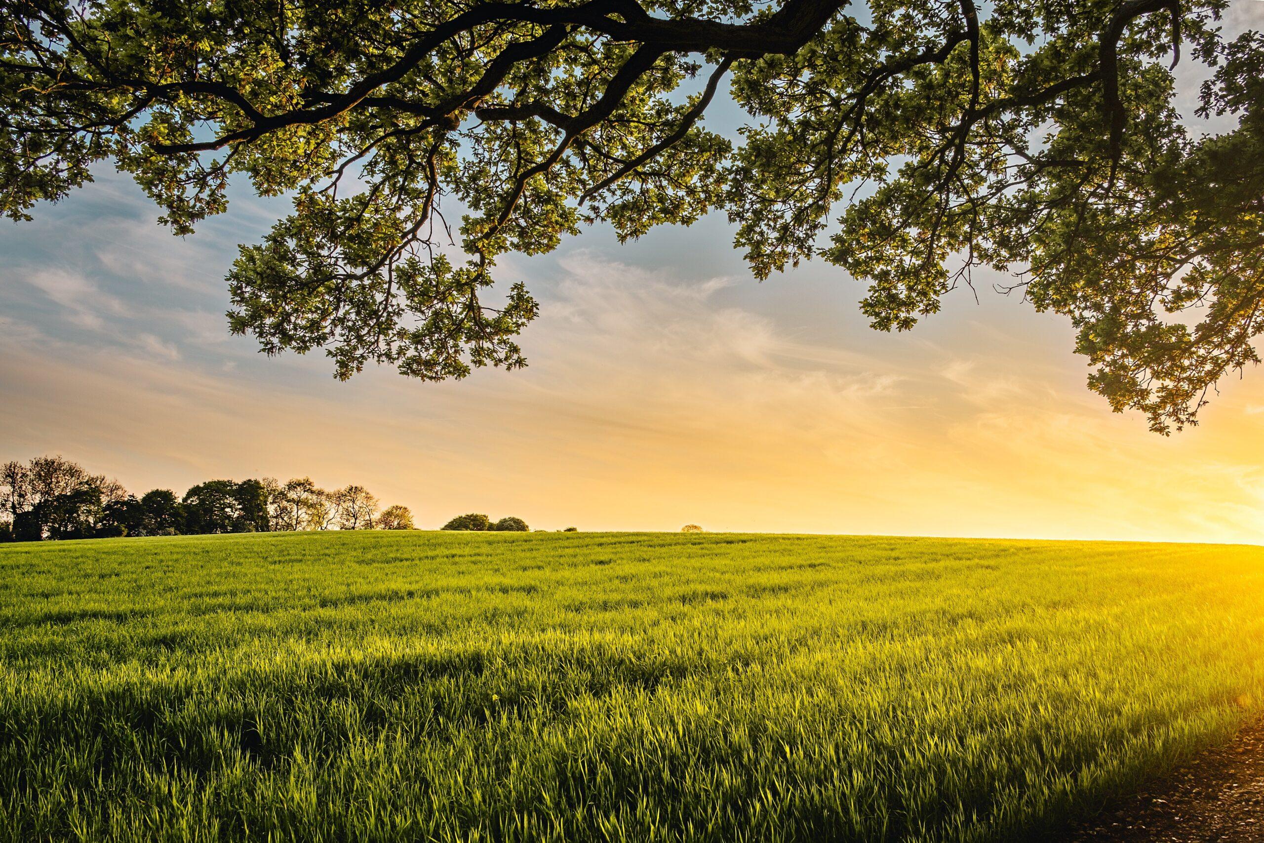 UOKiK dla rolnictwa – zobowiązanie Döhlera