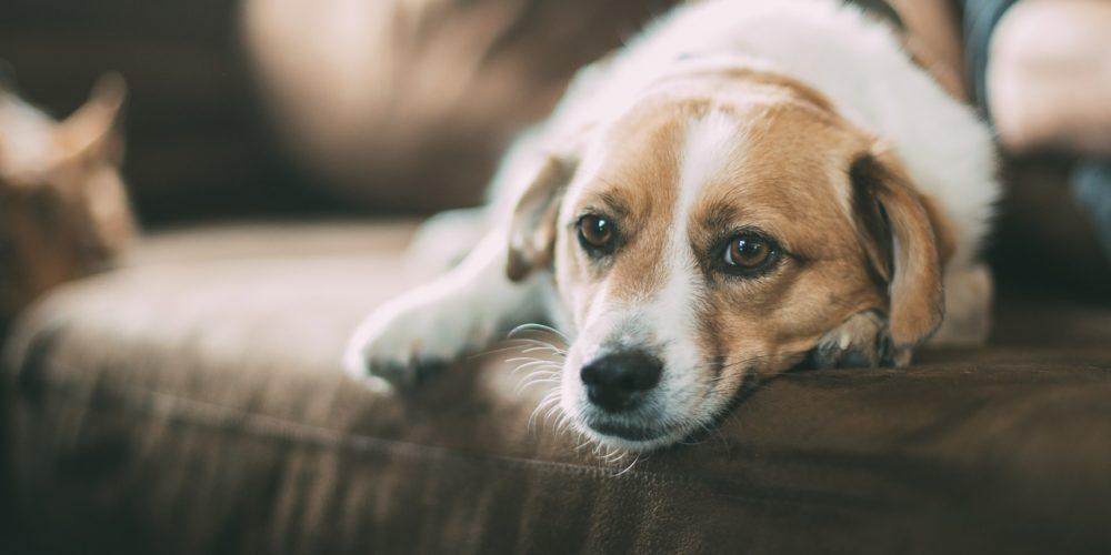 Szczekający pies w bloku – jakie konsekwencje grożą jego posiadaczowi?