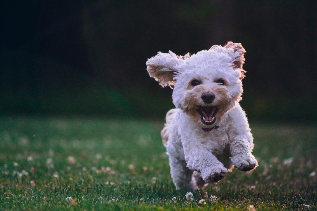Szczekający pies w bloku – co mogą zrobić zdenerwowani sąsiedzi?