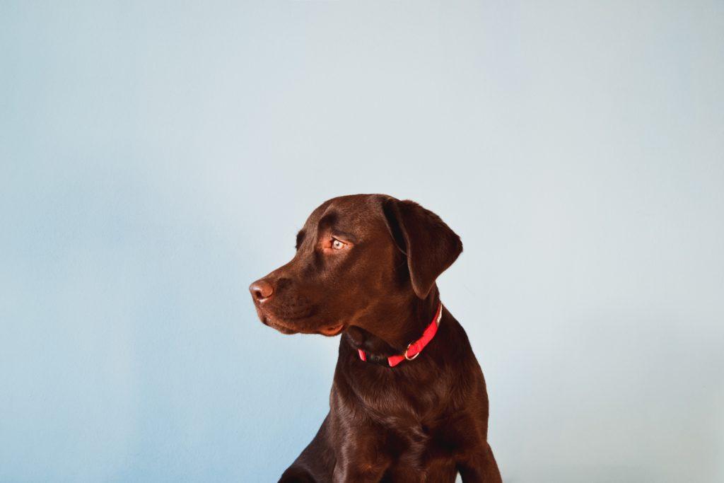 Czy szczekający pies może być odebrany właścicielowi?