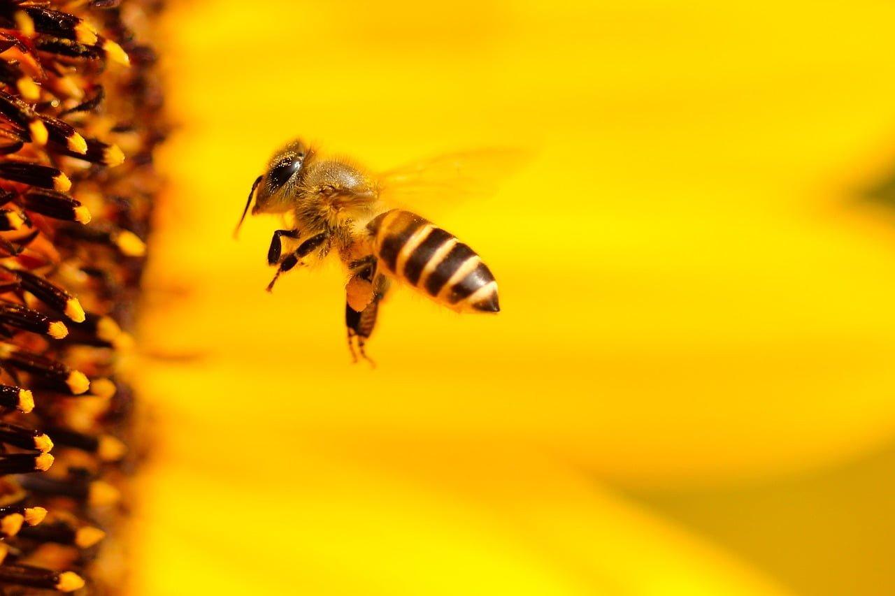 Dlaczego prawo chroni pszczoły?