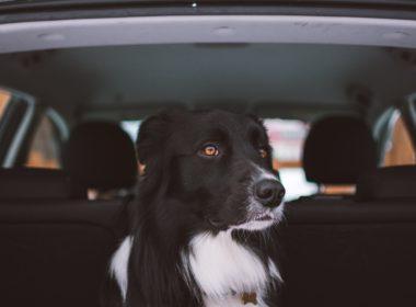 Rozbicie szyby w samochodzie - kiedy prawo na to pozwala?