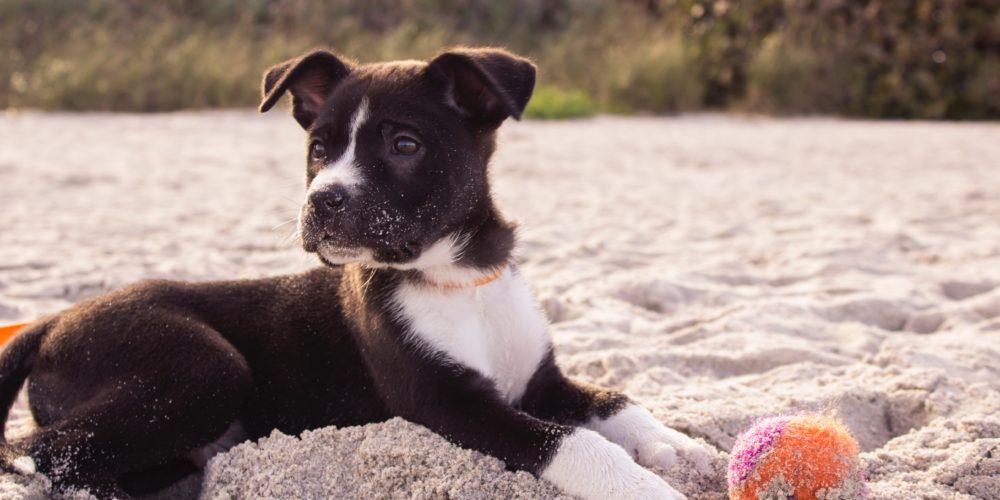 Kiedy trzeba zapłacić podatek za psa?