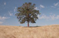 Usunięcie drzewa