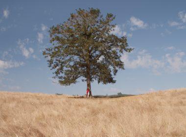 Przesadzenie jako forma usunięcia drzewa