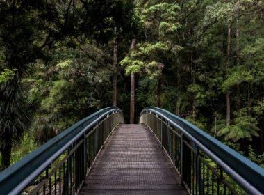 Konsekwencje ustalenia negatywnego oddziaływania przedsięwzięcia na obszar Natura 2000