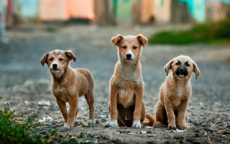 Zakazy i obowiązki wobec zwierząt domowych nałożone przez ustawę o ochronie zwierząt