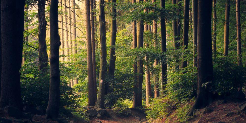 Obowiązek udostępniania informacji o środowisku i jego ochronie