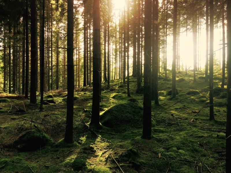 Czy skarb państwa będzie musiał zwrócić lasy odebrane Kościołowi?