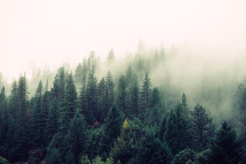 Kiedy przeprowadza się strategiczną ocenę oddziaływania na środowisko?