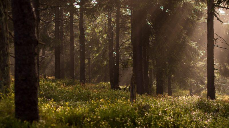 Zakaz wstępu do lasu –  wyrok Sądu Najwyższego