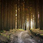 Odmowa udostępnienia informacji o środowisku i jego ochronie