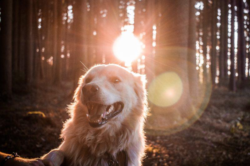 Puszczanie psa luzem w lesie - co za to grozi?