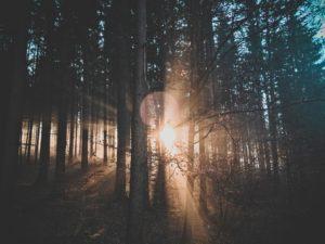 Szkodnictwo i paserstwo leśne