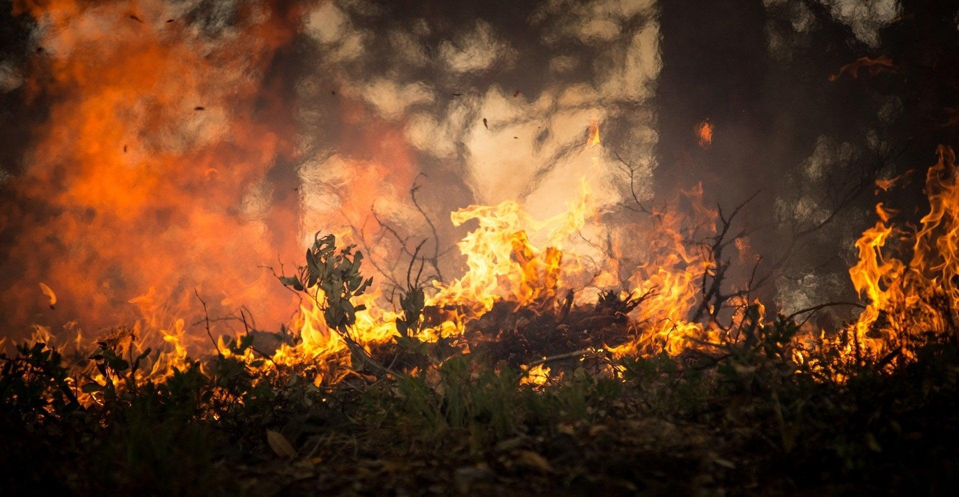 Co grozi za wypalanie traw?