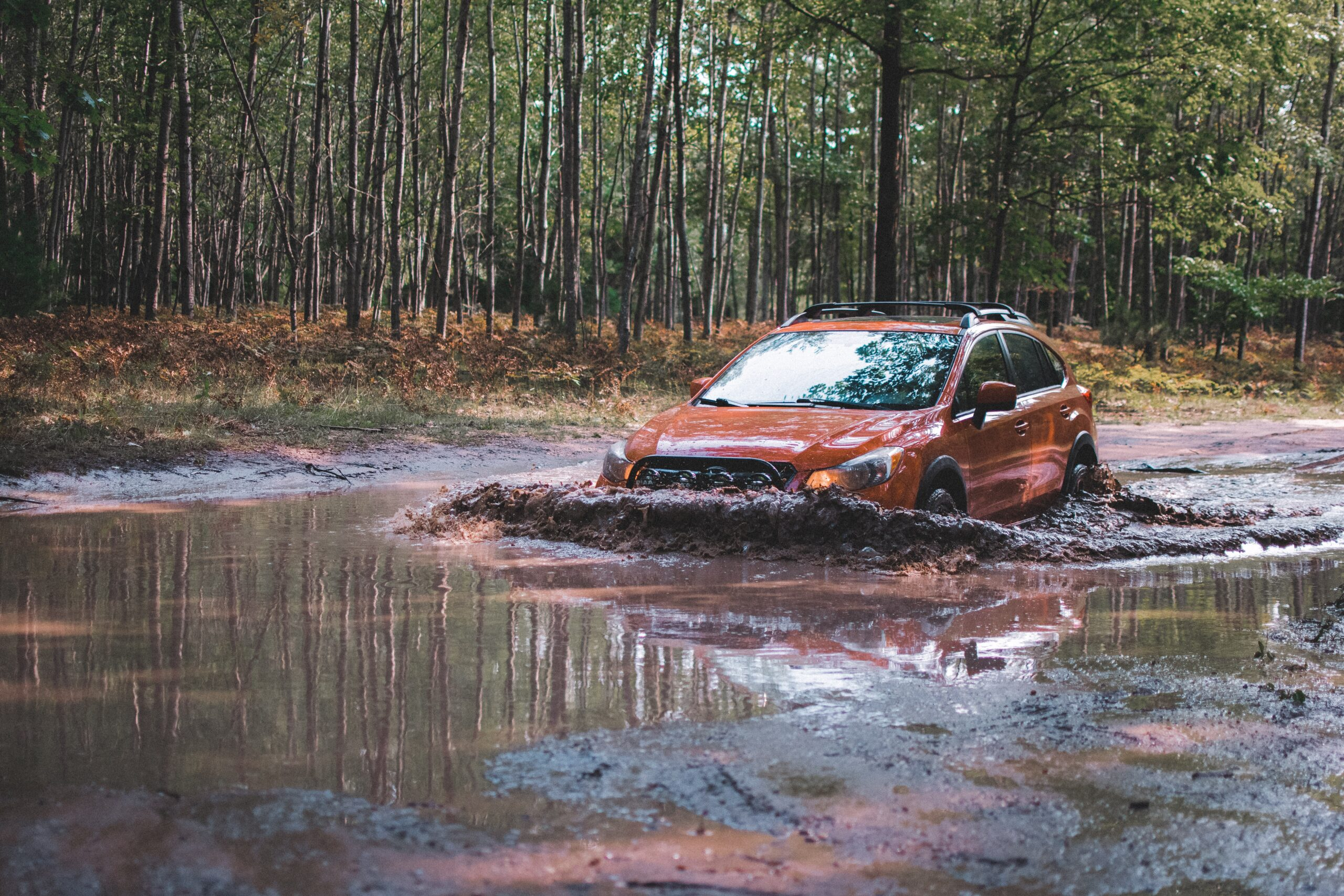 Czy można wjeżdżać autem do lasu? Ograniczenia nie tylko w czasie epidemii