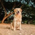 Odebranie zwierzęcia właścicielowi – nadchodzą zmiany?